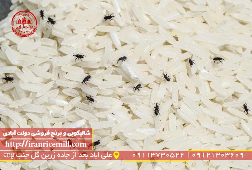 روش های جلوگیری از شپشک برنج