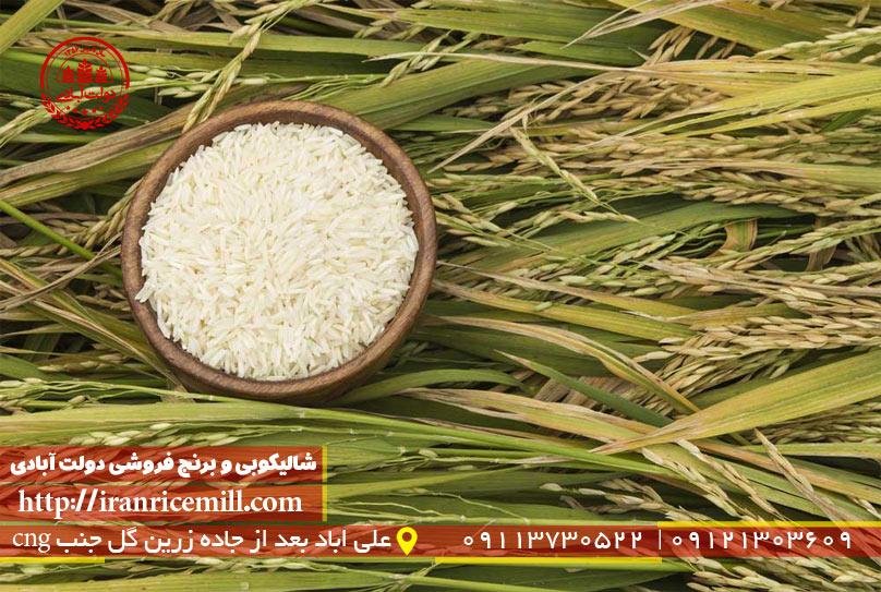 گران ترین برنج ایرانی کدام است؟